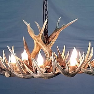 534-O white tail oval antler chandelier